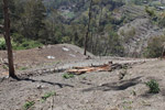 Hillside cleared for potato cultivation in the highlands of New Guinea