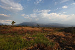Baliem Valley grassland
