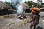 Dani man roasting hog [papua_0502]