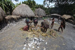 Dani women unearthing sweet potatoes from a cooked pit