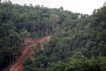 Deforestation-induced landslide near Jayapura
