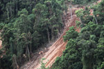 Deforestation-induced landslide near Jayapura [papua_1100]