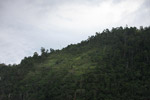 Deforested hillside near Jayapura along Lake Sentani [papua_1101]
