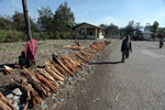 Firewood for sale in the Wamena market