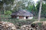 Papuan grass hut