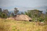 Papuan grass hut [papua_5283]