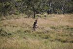 Dani man hunting [papua_5423]