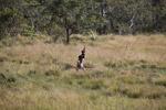 Dani man hunting [papua_5424]