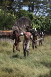 Dani men in ceremonial battle [papua_5447]