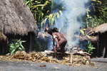 Papuan man roasting hog