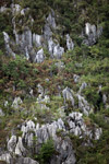 Limestone rock formations in New Guinea [papua_6037]