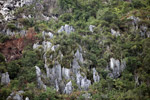 Limestone rock formations in New Guinea [papua_6041]