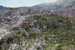 Limestone rock formations in New Guinea [papua_6045]