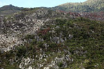 Limestone rock formations in New Guinea [papua_6046]