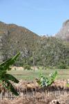 Limestone rock formations in New Guinea [papua_6062]