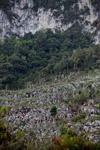 Limestone rock formations in New Guinea [papua_6079]