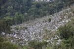 Limestone rock formations in New Guinea [papua_6085]
