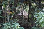 Dani jungle village