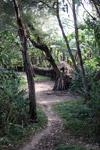 Dani jungle village [papua_6093]