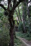 Dani jungle village [papua_6095]