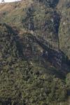 Terraced fields amid limestone rock formations in New Guinea [papua_6105]