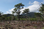 Deforestation near Manokwari