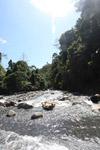 River in the Arfak mountains