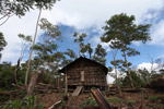 Traditional Mouley hut in the Arfak highlands outside of Manokrawi [west-papua_0555]