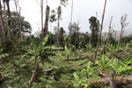Rotational forest clearing for banana and other crops [west-papua_0559]