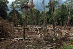 Deforestation in the Arfak mountains [west-papua_0589]