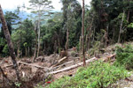 Deforestation in the Arfak mountains [west-papua_0594]