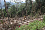 Deforestation in the Arfak mountains [west-papua_0595]