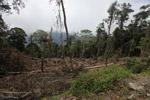 Deforestation in the Arfak mountains [west-papua_0596]