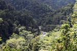 Rainforest in the Arfak Mountains [west-papua_0616]
