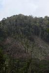 Deforestation in the Arfak mountains [west-papua_0633]