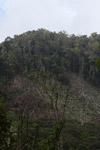 Deforestation in the Arfak mountains [west-papua_0634]