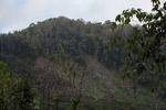 Deforestation in the Arfak mountains [west-papua_0635]