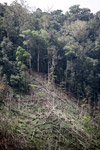 Deforestation in the Arfak mountains [west-papua_0640]