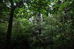 Arfak cloud forest [west-papua_0760]