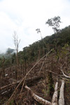 Deforestation in the Arfak mountains [west-papua_0771]