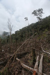 Deforestation in the Arfak mountains [west-papua_0773]