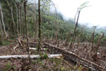 Deforestation in the Arfak mountains [west-papua_0781]