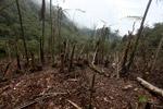 Deforestation in the Arfak mountains [west-papua_0795]