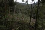 Swidden agriculture in New Guinea [west-papua_0801]