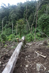 Deforestation in the Arfak mountains [west-papua_0825]
