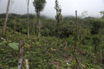 Deforestation in the Arfak mountains [west-papua_0829]