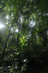 Lowland rain forest in New Guinea