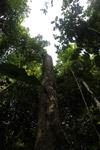 Rainforest tree stump [west-papua_0959]