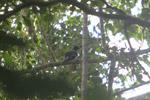 Bird [west-papua_0995]