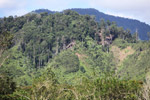Deforestation outside of Manokwari [west-papua_5226]